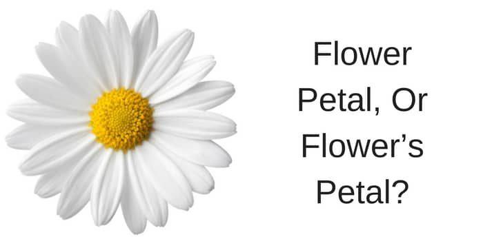 Flower Petal, Or Flower's Petal?