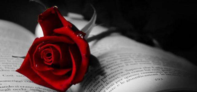 Nineteen Roses