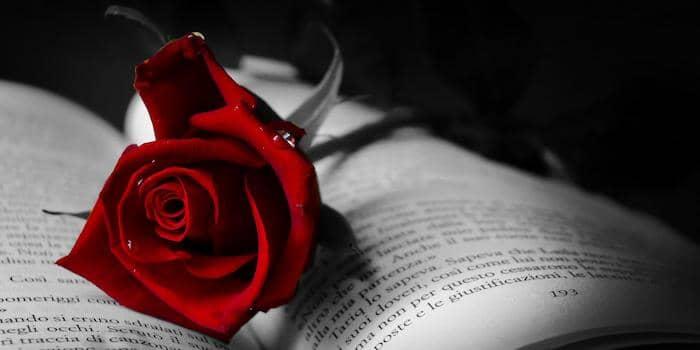 Nineteen Roses by Derek Haines
